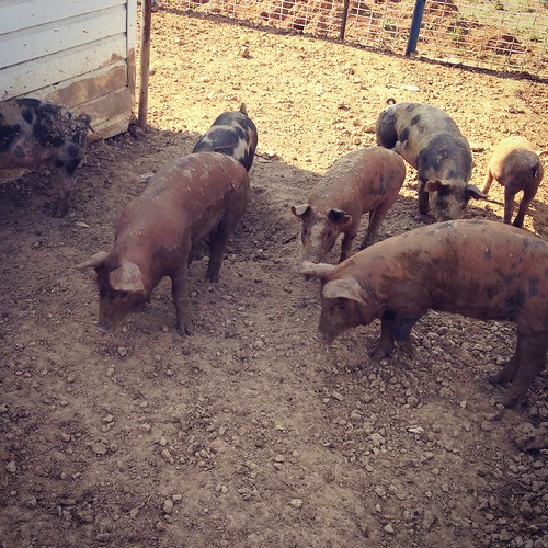 Farm Weekend