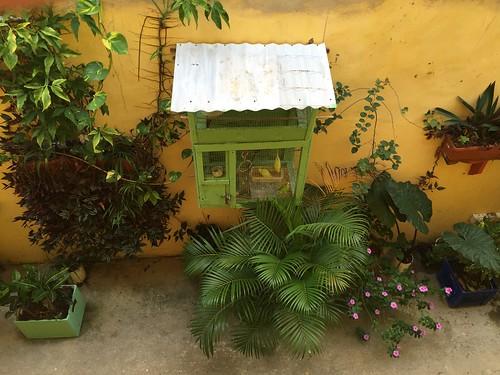Hotel Guayacan - Vogelkäfig / Birdcage