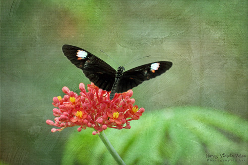 The Butterfly World | by Nancy Violeta Velez