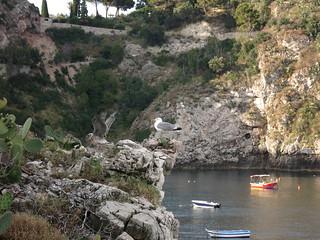 Taormina Riserva Naturale Orientata Isola Bella - birds)