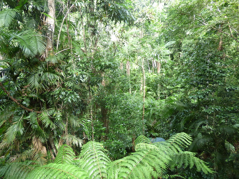 Cairns 2016 day 2 Daintree