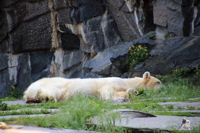 Tierpark Berlin 28.05.2016  01