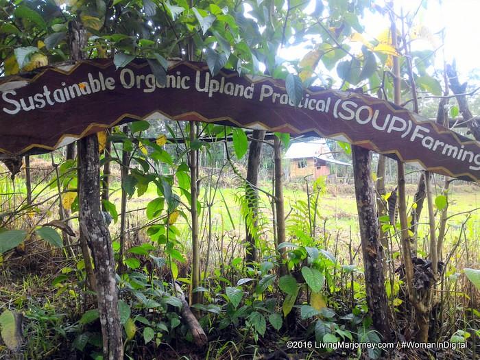 LivingMarjorney-Binahon-Agroforestry-Farm-Bukidnon (78)