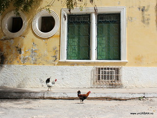 A rooster and a hen out for a stroll on Mozambique Island | by Malin and Espen