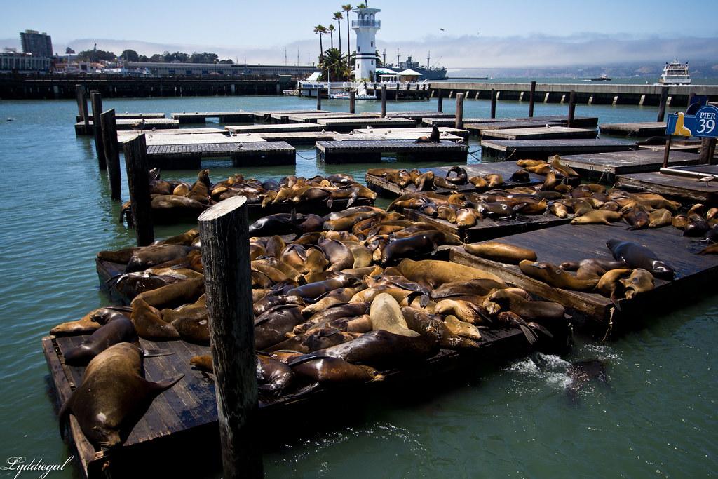 pier 39 puppy pile.jpg