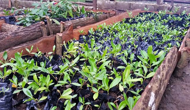 bagged-plants