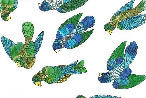 Birds Cooured