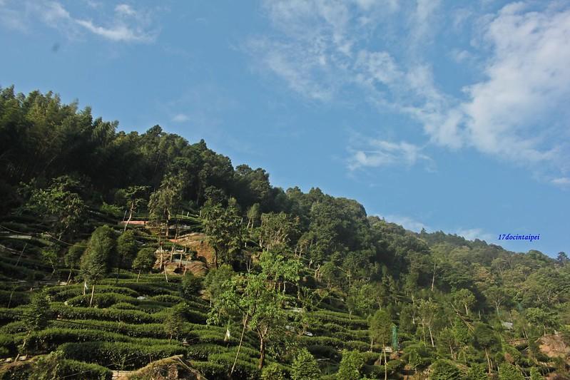 Taiwan Island trips。Couchsurfing。環島景點。南投秘境。忘憂森林。17度C隨拍- (2)