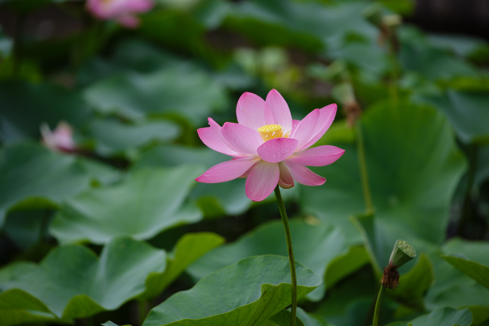 2016-06-23 修景池 001-2