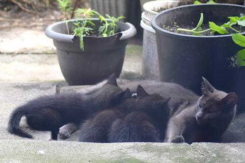 Grisou & her kittens