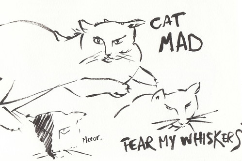 mad cat | by finslippy
