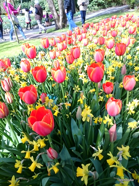 tulips in Keukenhof, Lisse