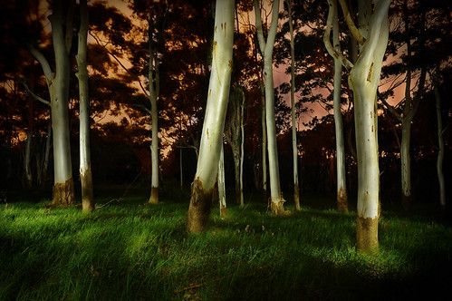 White Gums in Centennial Park | by mickyg9
