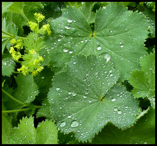 Wet Leaves | by kcm76
