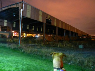 "Rosie says ""what's that?"", old building, soil, industrial field, pink sky at night, cloudy, Interbay, Seattle, Washington, USA 