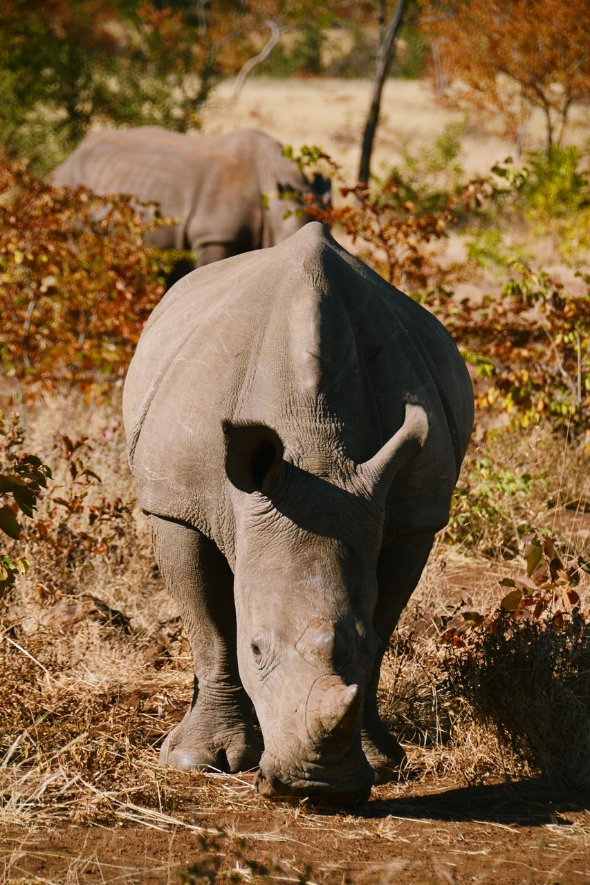 safari52