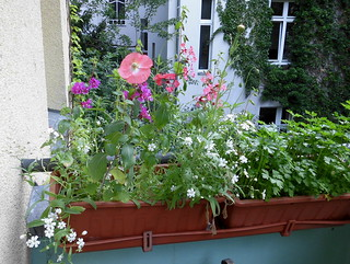 Wiesenblumen auf dem Balkon