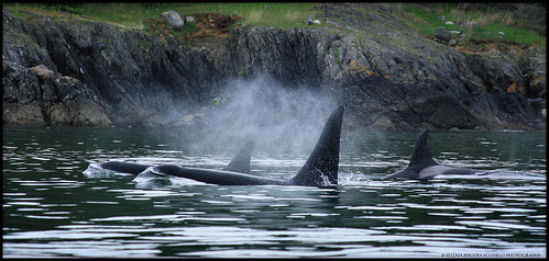 SRKW 13 | by Selena Rhodes Scofield Photography