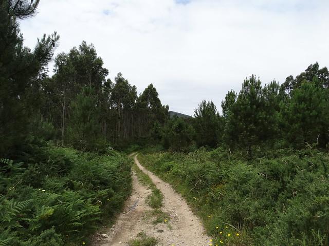 Camino en la Ruta das Lagoas de Xuño e San Pedro