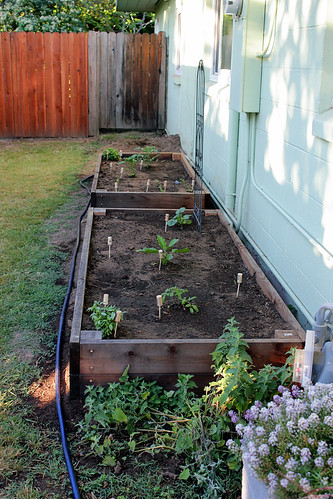 Side yard veg bed | by andiezoe
