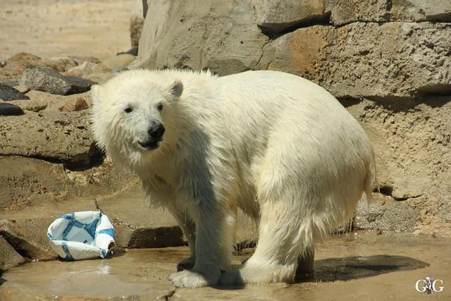 Besuch Zoo am Meer 26.06.201665