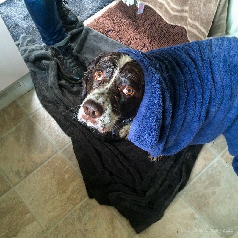 Max was a bit wet