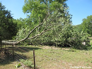 (19-1) Beautiful old oak tree that fell during Thursday's storm - FarmgirlFare.com | by Farmgirl Susan