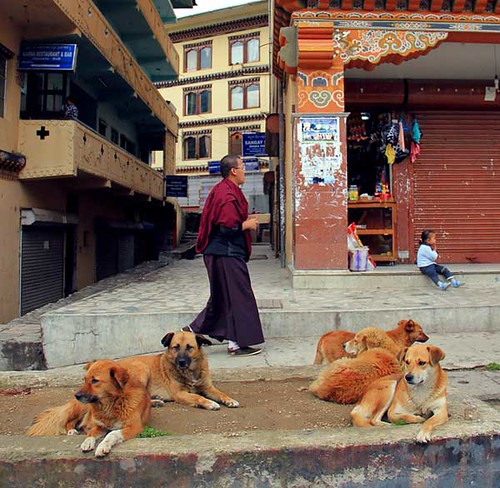 Stray dogs hanging out in the street in Bhutan's capital, Thimphu. Photo by Nikhil Patel. From dogster.com