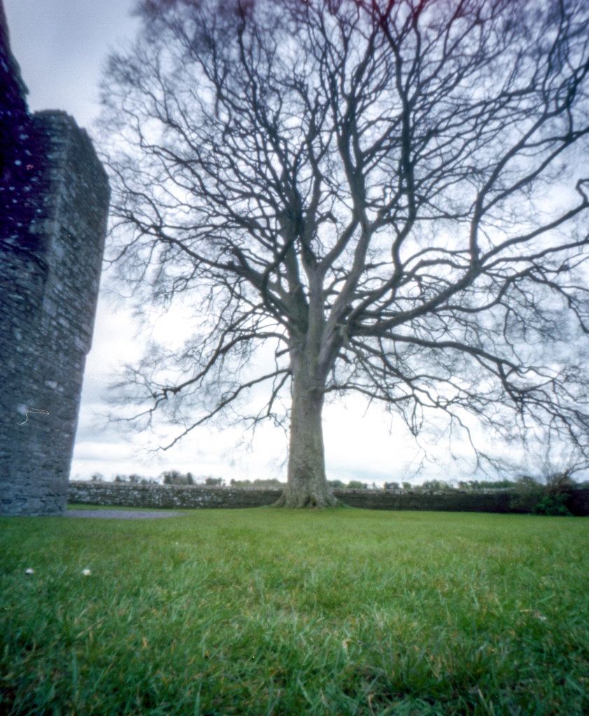 A Tree in Ireland