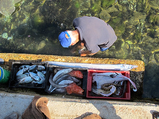 cleaning fish | by David Lebovitz