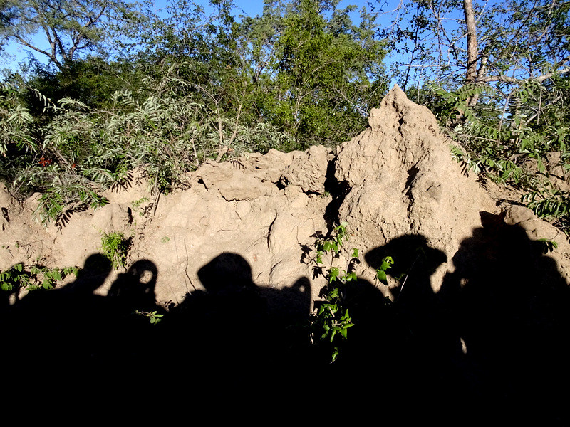 Lion Sands Safari Day 3- Termite Mound