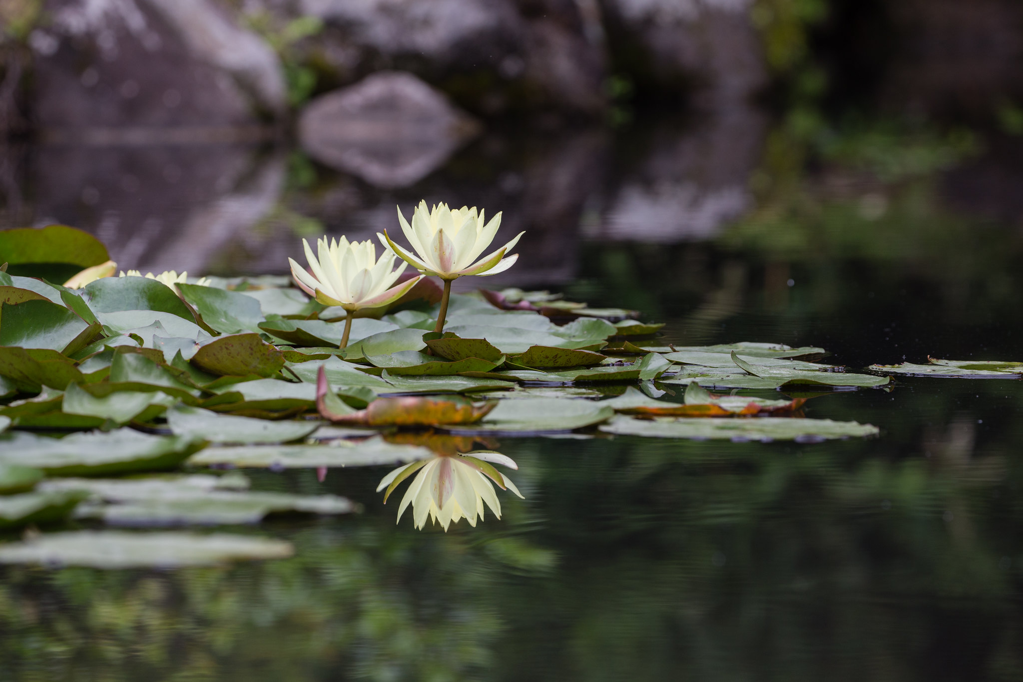 2016-06-15 野毛山動物園 001-3