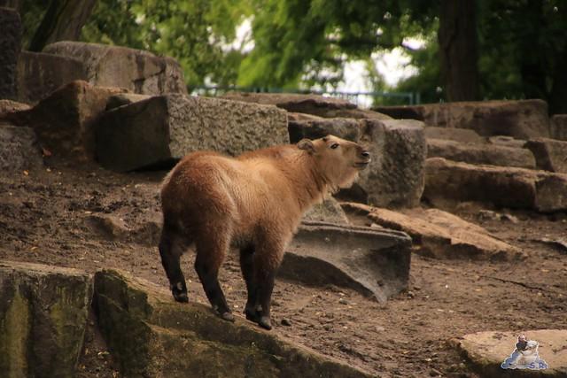 Tierpark Berlin 18.06.2016  081