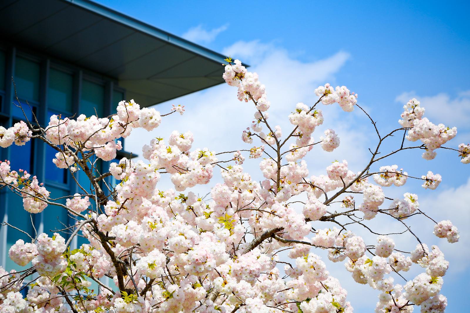 2015 April Kansai 35
