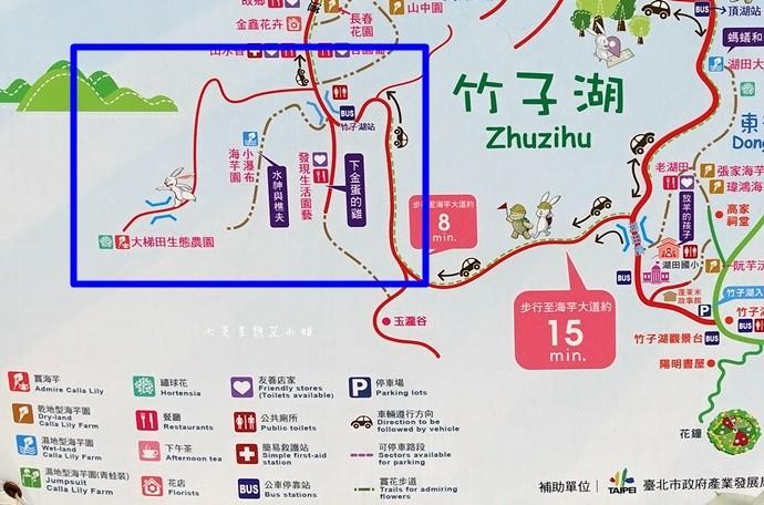 34 陽明山 繡球花 大梯田 竹子湖