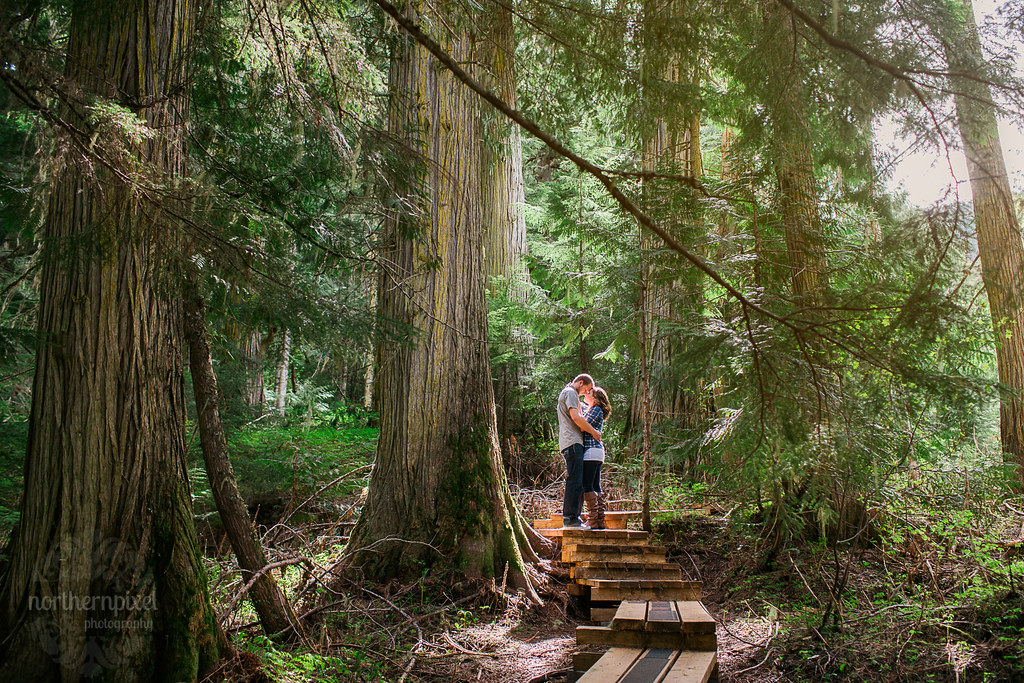 Ancient Forest Engagement Session - Prince George BC