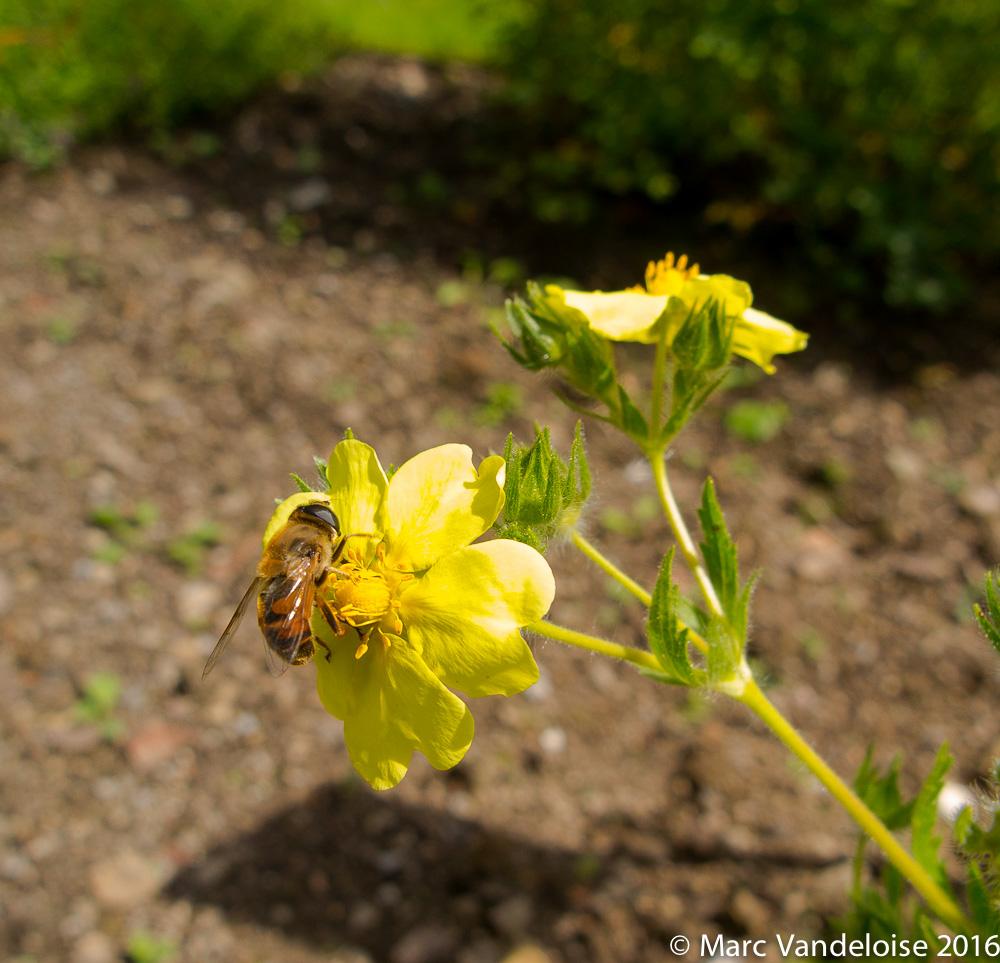 Sortie Picnic Chevtogne 03/07/16 - Photos 27893210660_69b515eef8_o