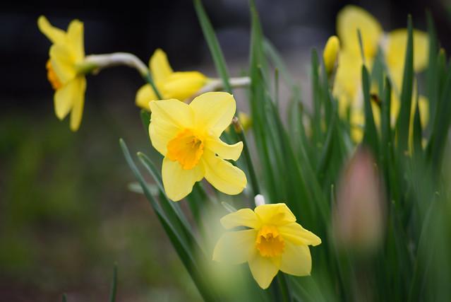 spring flower 1
