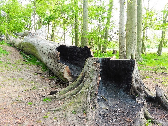 Burnout Tree