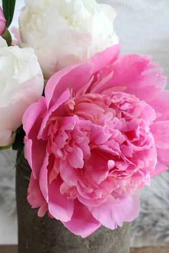 Lieblingsblumen