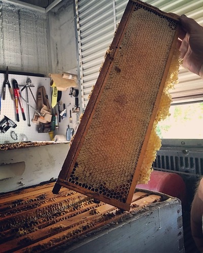 Honey harvest June 2016