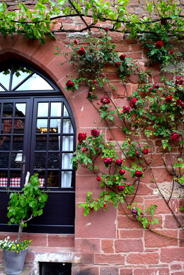 Climbing Roses in Collognes-la-Rouge | www.rachelphipps.com @rachelphipps