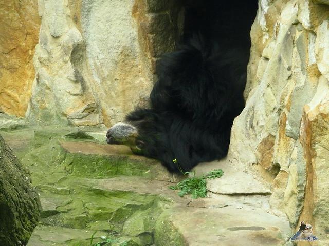 Zoo Berlin 27.05.2016   031