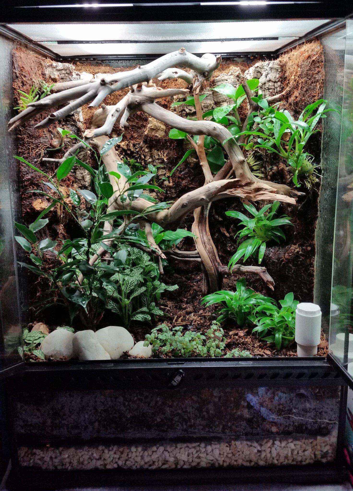Crested Gecko Vivarium Dendroboard