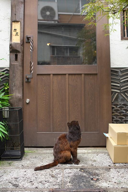 東京路地裏散歩 北千住のネコ 2016年6月25日
