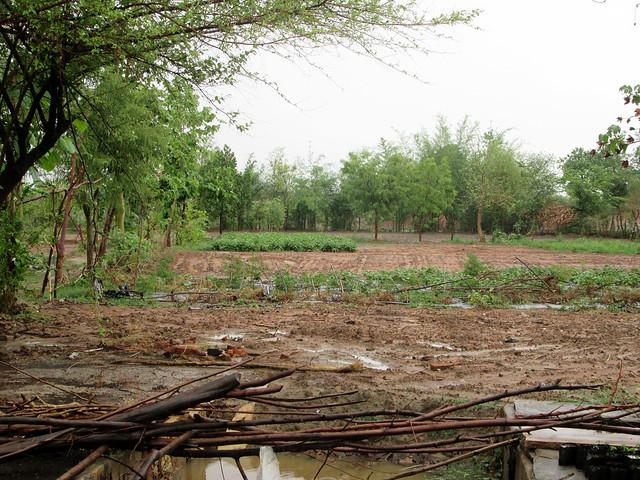 बालेन्दु अपने खेतों में पारम्परिक तरीके से खेती करते हैं