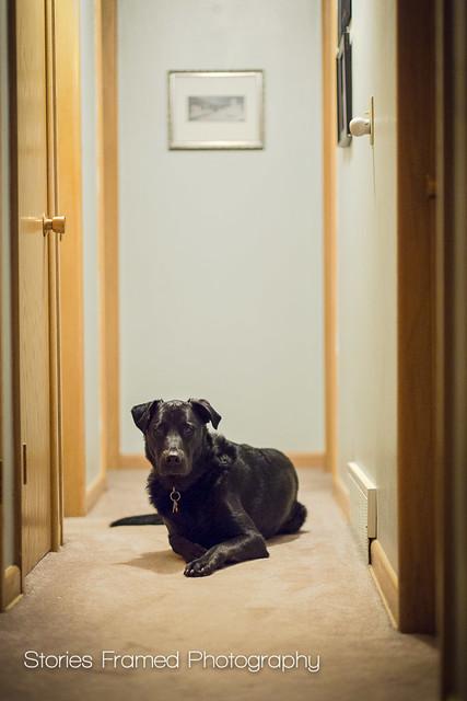 314. | hallway shadow.