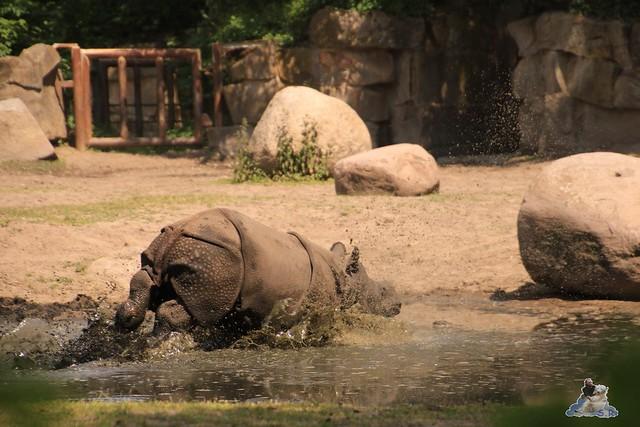 Tierpark Berlin 29.05.2016   0123
