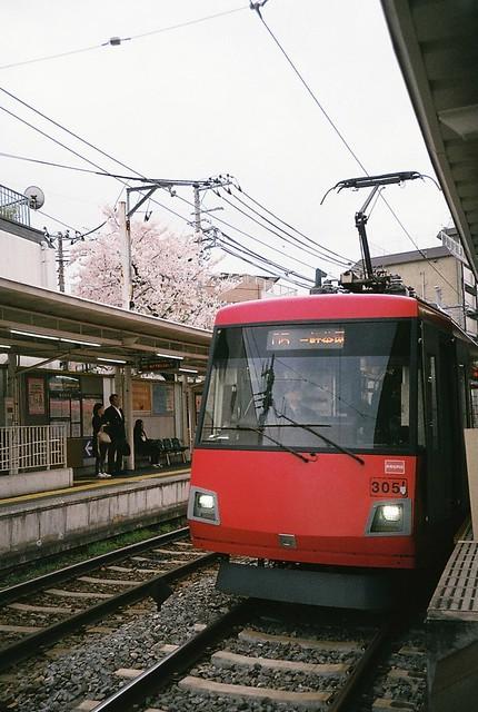桜と世田谷線