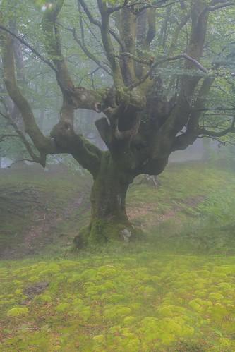 Parque Natural de #Gorbeia #Orozko #DePaseoConLarri #Flickr - -493